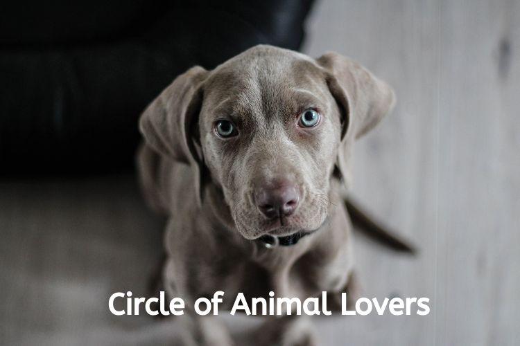 circle of animal lovers